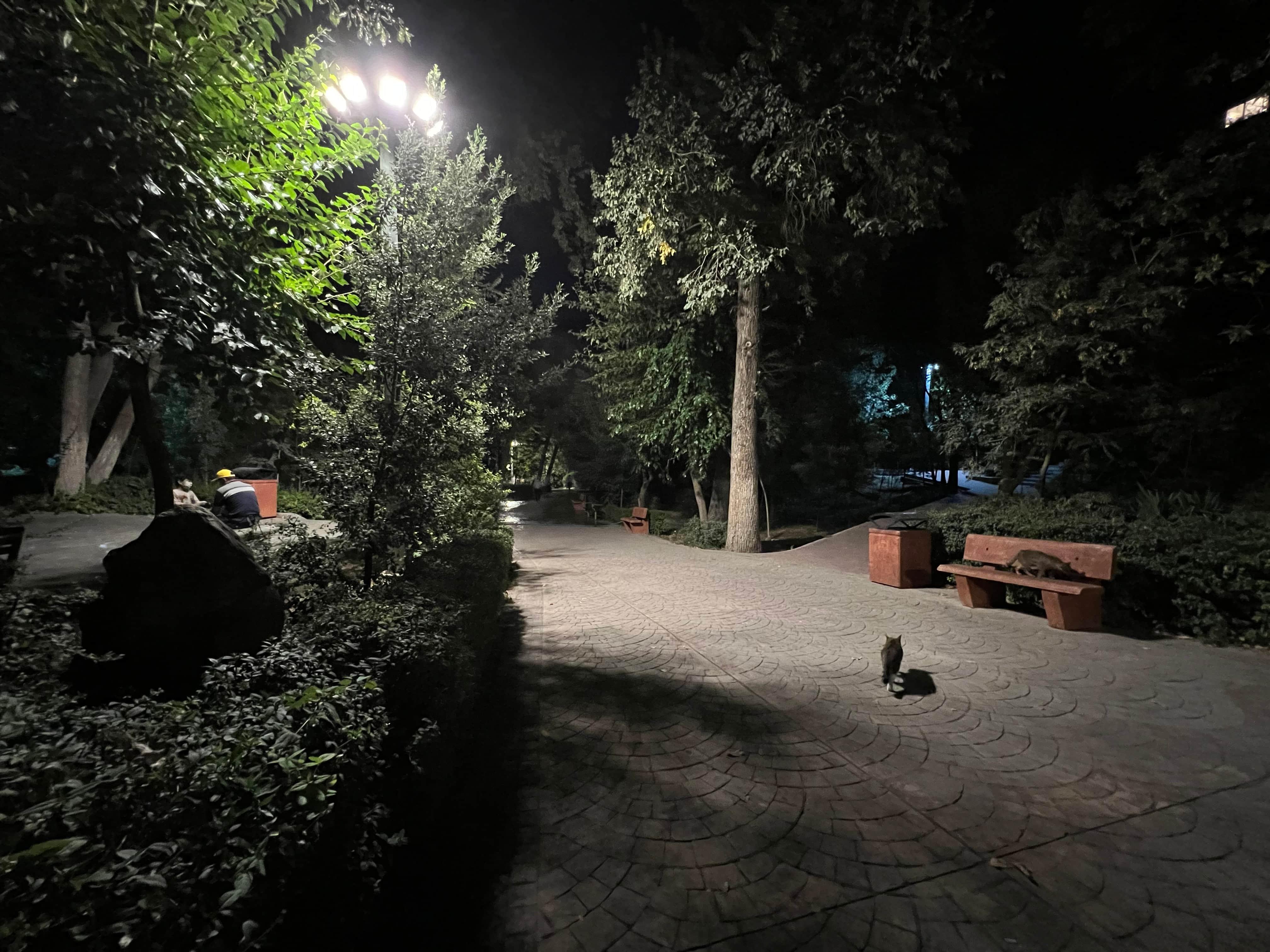 عکاسی در شب آیفون 13 پرو